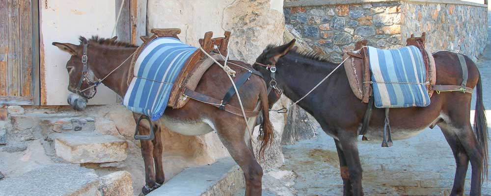 "Donkey Ride Tour ""Greek pic-nic"""